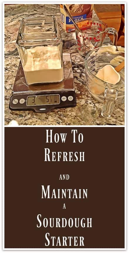 How to Refresh and Maintain a Sourdough Starter for Making Sourdough Bread