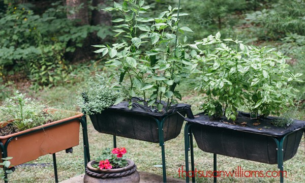 You can grow your own fresh herbs even with minimal sunlight and bad soil. Try using an Earth Box!
