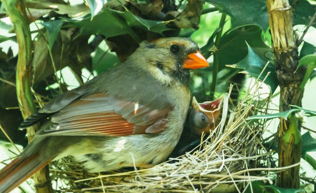Cardinals-3