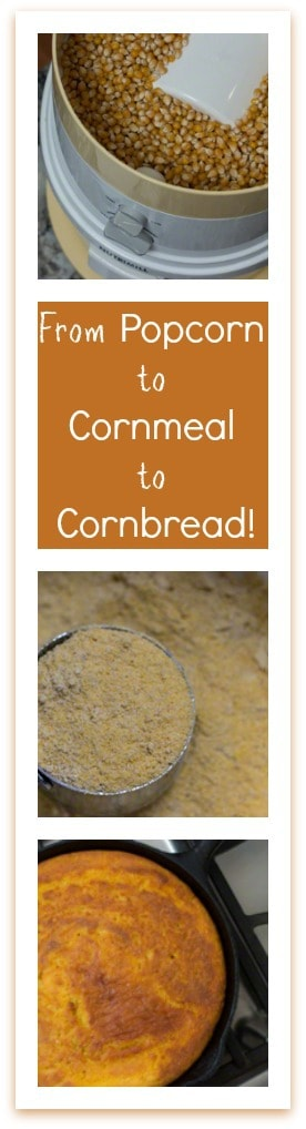 From Popcorn to Cornmeal to Cornbread How to Grind Your Own Cornmeal from Popcorn