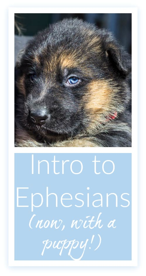 Intro to Ephesians: now, with a puppy! A devotional post, with a puppy to soften the blow.