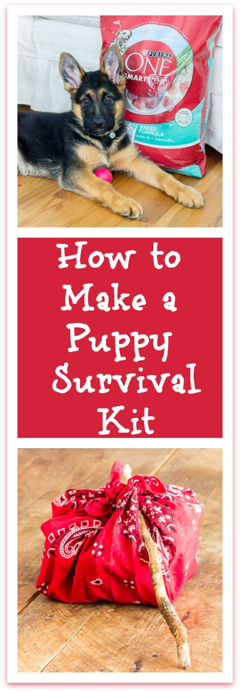 @Target #ad #FeedDogsPurina New Puppy Survival Kit: 5 Things You and Your New Puppy Need to Survive Those First Few Weeks Together #ad