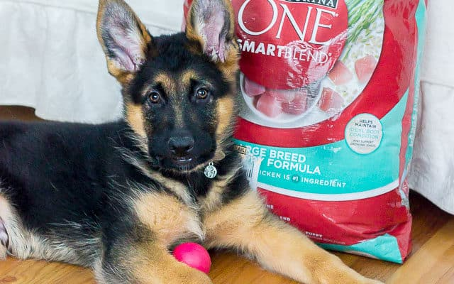 How to Make a Puppy Survival Kit