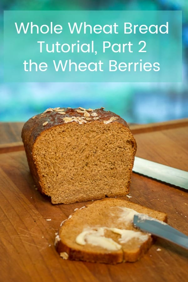 Part 2 of my 4 Part Tutorial on How to Make Homemade Whole Wheat Bread: the Wheat Berries #Wholewheatbread #Wheatberries