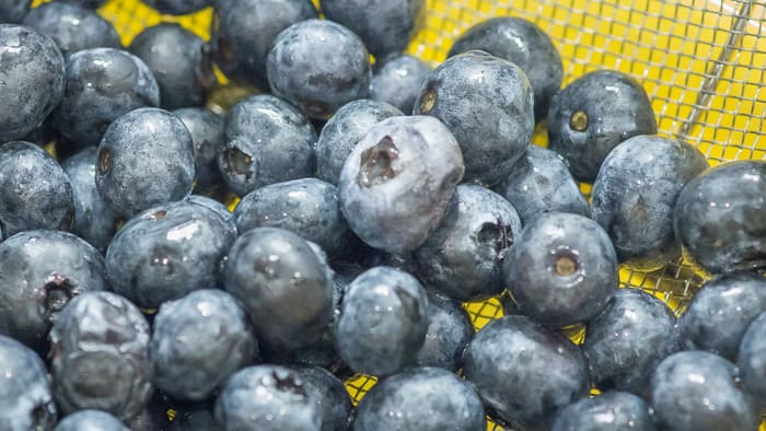 Blueberries that are freshly washed and drained.